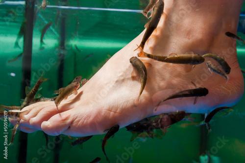 Hauttherapie mit Doktorfischen