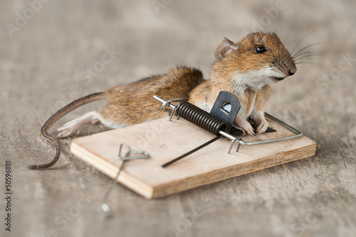 mouse in trap on end of life