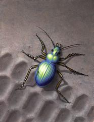 beetle running over skidmark