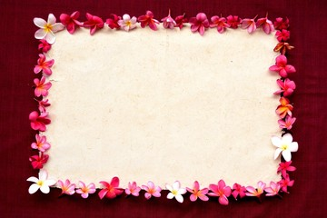 Pink plumeria on exotic dark red background
