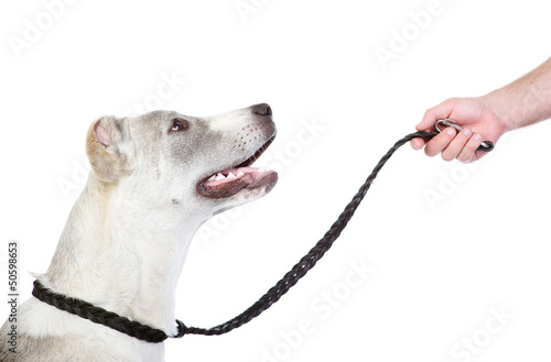 Teaching a dog. isolated on white