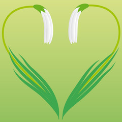 Heart of snowdrop flowers