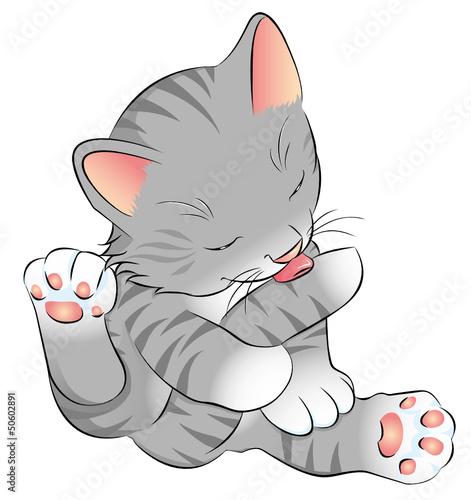 Aluminium Katten graues Katzenbaby putzt sich