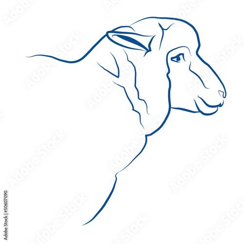 mouton, brebis, agneau