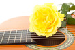 Beautiful yellow rose on guitar
