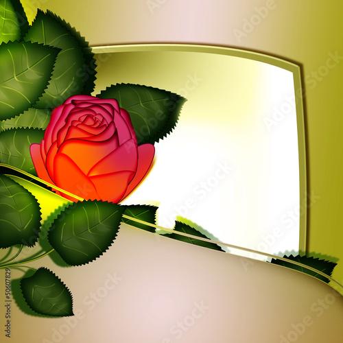 Flower rose. frame