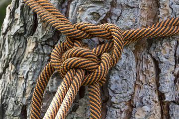 Macro climbing rope tied to a big tree