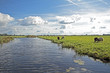 Typical wide dutch landscape with sheep, water and cloudscapes