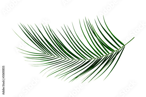 In de dag Palm boom Palm Leaf