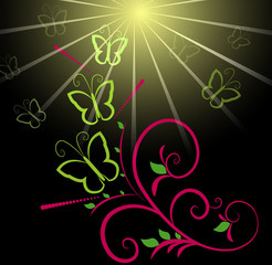 Butterfly and sun background