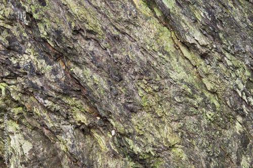 Rock / Cliff with Lichen & Algae Background Texture.