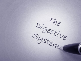 System digestive human
