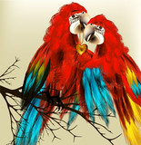 Fototapety Cute couple of colorful vector realistic ara parrots sit on bran