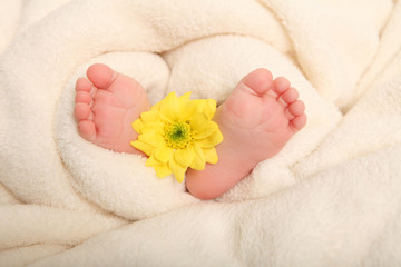 Babyfüße mit Narzisse