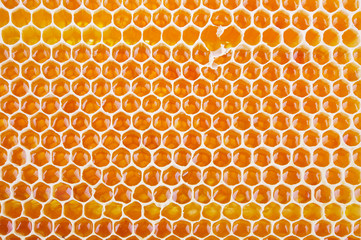 fresh honey in comb