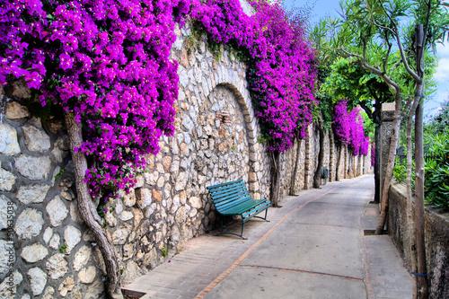 Obraz Vibrant flower draped pathway in Capri, Italy