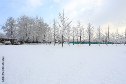 landscape of snow
