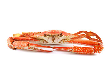 Cooked Sand Crab