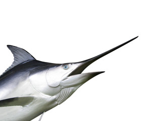 Marlin fish - Swordfish
