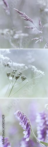 Summer Meadow © B. and E. Dudziński