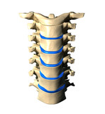 Cervical Spine - Anterior / Front view