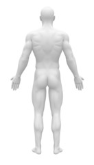 Blank Anatomy Figure - Back view