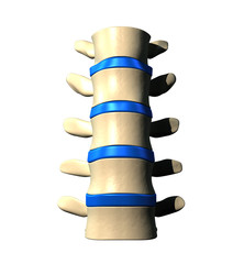 Lumbar Spine - Anterior view / Front view