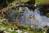 Gartenteich Frühling Enten