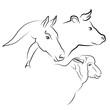 viande de cheval, boeuf et mouton