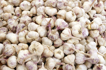 Italian Garlic Bulbs