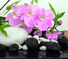 Spa concept: orchidées, du bambou et pierres
