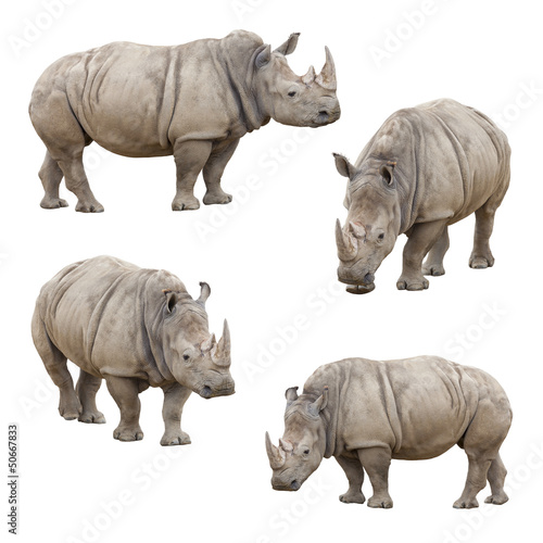 Foto op Canvas Neushoorn Set of Rhinoceros Isolated on a White Background