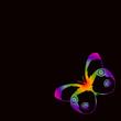 Beau papillon arc-en-ciel