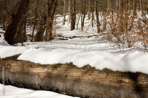 Fallen tree trunk in snowy winter forest