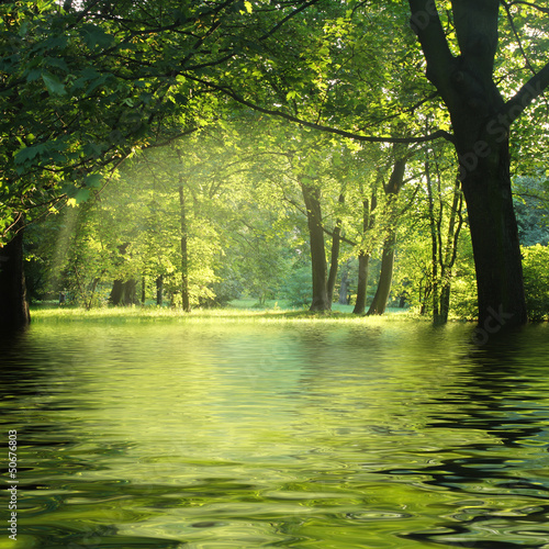 Fototapeten,natur,nass,wasser,bäume