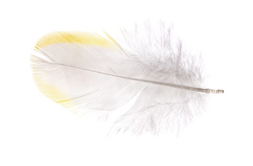 single isolated feather with yellow edge