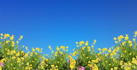 Frühjahrsblumen & blauer Himmel