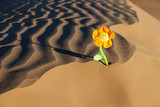 sand view background with a flower