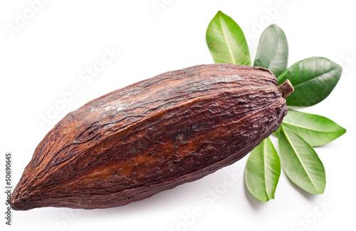 Cocoa pod - 50690645