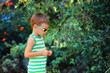 little boy in a green shirt and sunglasses, walks among the gree