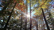 Autumn forest backlit