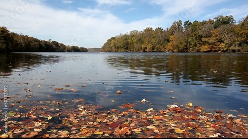 Pretty floating leaves and calm water autumn landscape