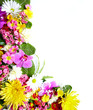 Floral greeting card with beautiful flowers.