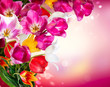 Spring Flowers. Tulips Border Art Design
