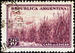 Sugar cane and factory (Argentina 1936)