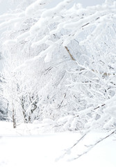 Light snowy brunches of trees background
