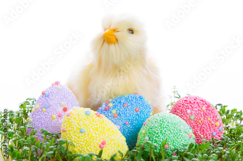 Chick and colorful Easter eggs in garden cress