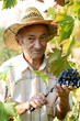 Senior vine-grower