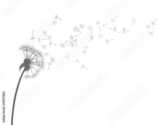 Vector Illustration of Dandelion