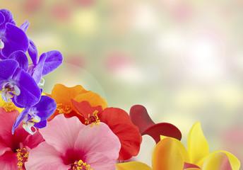 des fleurs dans un angle